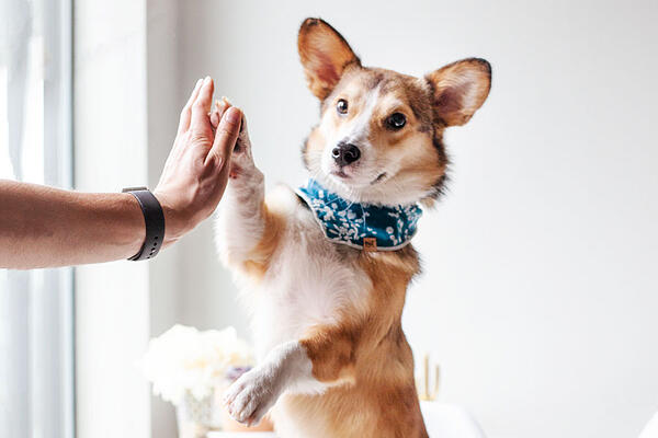 hugocorg-furiends-high-five