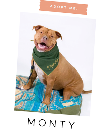 monty-adoptable