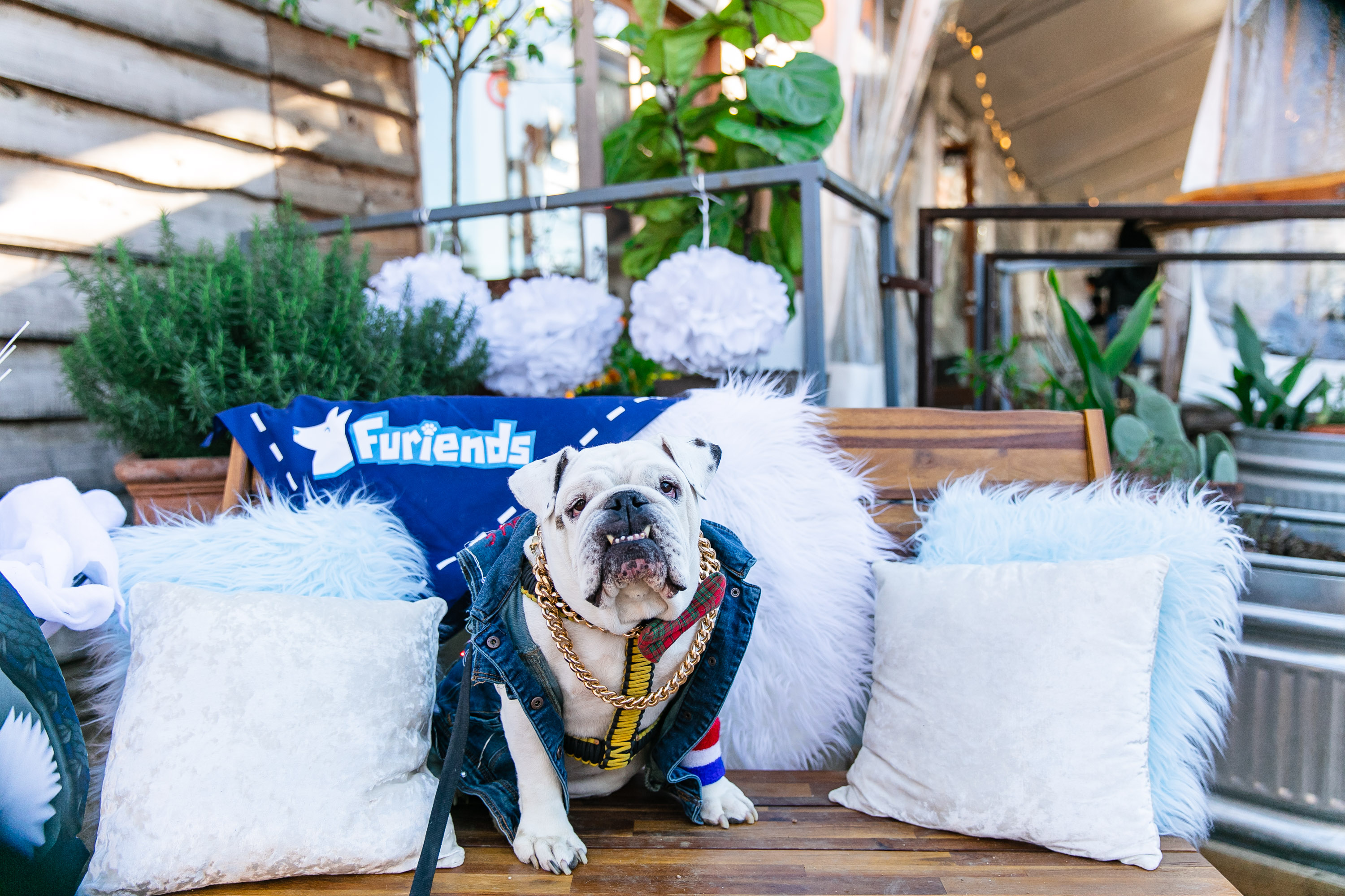 The Whirlwind Launch of Furiends: What's Happened & What's Coming